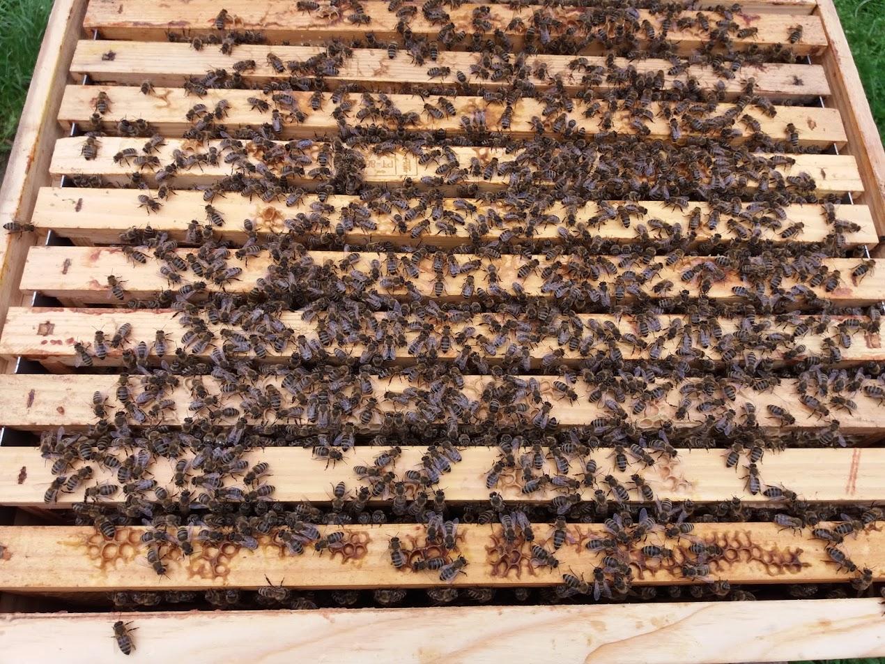 Beespace-4